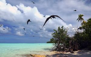 oiseaux-s'envloant