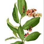 taharaa-arbre-pue-ses-feuilles